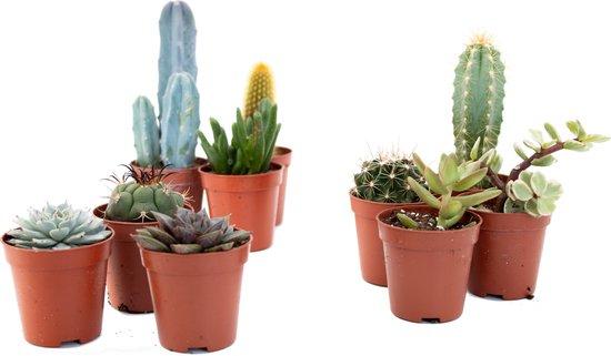 Ikhebeencactus mini cactus en vetplanten mix pot Ø5,5cm 10 stuks