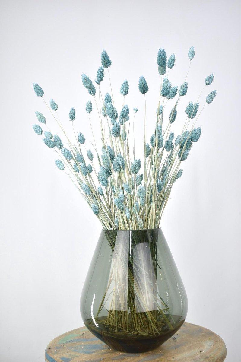 Droogbloemen Phalaris Licht Blauw   Kanariegras   Natuurlijk Bloemen