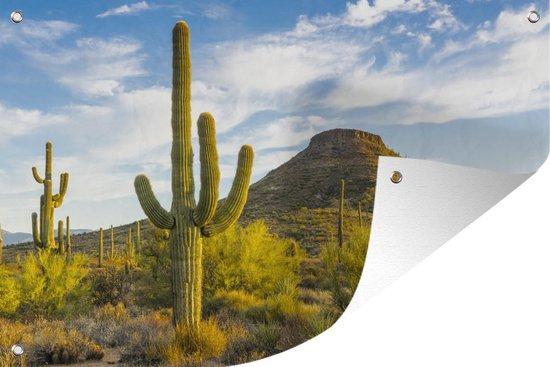 Tuinposter Arizona - Cactussen in Arizona 180x120 cm - Tuindoek/Buitencanvas/Schilderijen voor buiten (tuin decoratie) XXL / Groot formaat!