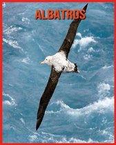 Albatros: Erstaunliche Fakten & Bilder