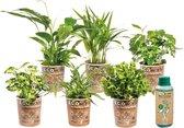 Ecoworld Makkelijke & Luchtzuiverende Kamerplanten Mix - 6 stuks - Ø 12 cm - Hoogte 30-40 cm in Eco Potten