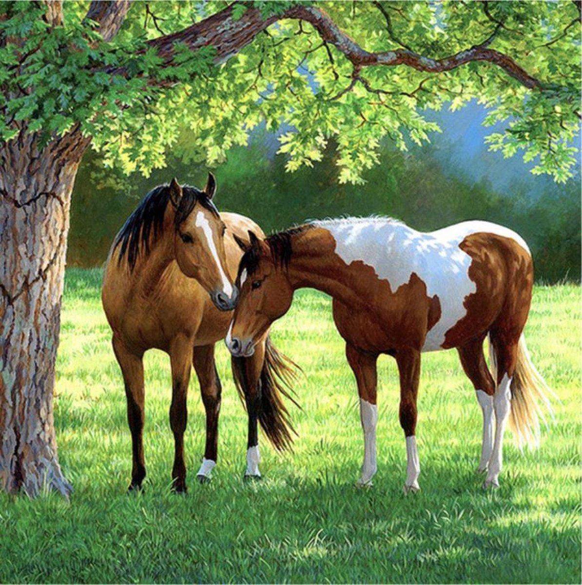 Diamond Painting Pakket Prachtige Paarden Staan Onder een Boom - Volledig - Diamond Paintings - 30x30 cm - Vierkant - Dotz - SEOS Shop ®