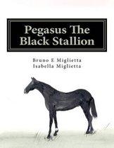 Pegasus the Black Stallion