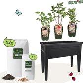 Grow Up! - Een  moestuintje is kinderspel – Complete kweekset met e-learning programma – incl. bio-fruitplanten, ELHO®-kweektafel en aarde