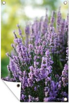 Close-up van lavendel tegen een groene achtergrond tuinposter 60x90 cm - Tuindoek / Buitencanvas / Schilderijen voor buiten (tuin decoratie)