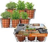 Urban Gardening Herbs per 6   DIY   Keukenkruiden   Kweekset