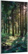 Plexiglas –Bomen in het Bos– 100x200cm Foto op Glas (Wanddecoratie op Plexiglas)
