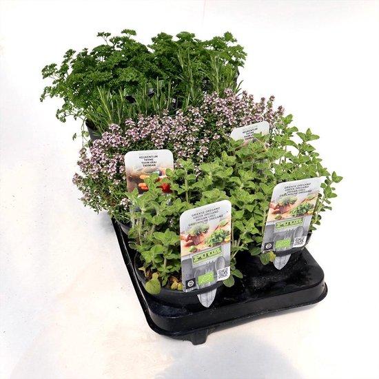 Mediterraanse kruiden mix - biologisch - 6 planten in pot Ø14 cm