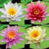 Waterworld Waterlelies Mix - 4 Kleuren + 4 Aqua Sets