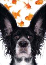 Cover Setje   nr.6 FUNNY ANIMALS   voor LOS bij te bestellen A5-PlanAgenda's van CitrusPers