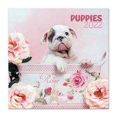 Honden kalender 2022-puppies- formaat 30 x 30 cm.