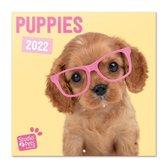 Honden  kalender 2022 - Puppies - schattig - cute - formaat 30 x 30 cm