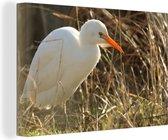 Prachtige witte ibis met een oranje snavel Canvas 30x20 cm - klein - Foto print op Canvas schilderij (Wanddecoratie woonkamer / slaapkamer)