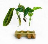 Stekjes set (met 3 surprise stekjes!) voor jouw Urban jungle [Hydrocultuur - Hydroponie - Stekken - Trendy]
