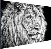 Leeuw in de winter  Aluminium 120x80 cm - Foto print op Aluminium (metaal wanddecoratie)