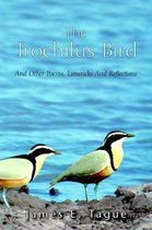 The Trochilus Bird