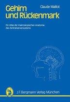 Gehirn und Ruckenmark