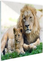 Vader en leeuwenwelp Glas 30x20 cm - klein - Foto print op Glas (Plexiglas wanddecoratie)