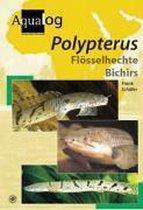Aqualog Polypterus