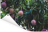 Rijpende mango's aan de boom Tuinposter 60x40 cm - klein - Tuindoek / Buitencanvas / Schilderijen voor buiten (tuin decoratie)