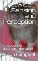 Ratwise - Sensing and Perception (How your rats experience the world)