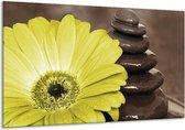Glasschilderij Bloem | Wit, Bruin, Groen | 120x70cm 1Luik | Foto print op Glas |  F002583