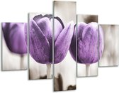 Glasschilderij Tulpen | Paars, Grijs, Wit | 100x70cm 5Luik | Foto print op Glas |  F002791