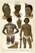 Tatoeage, mooie vergrote reproductie van een oude plaat met verschillende tattoo's bij verschillende volken uit ca 1910