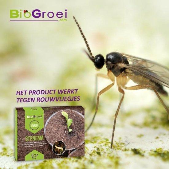 Stenema 10m² - Aaltjes tegen Rouwvliegjes - Tegen Larven van Rouwvlieg - 100% Natuurlijke Biologische Bestrijding - Biogroei