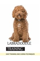 Labradoodle Training- Easy Training And Caring Techniques