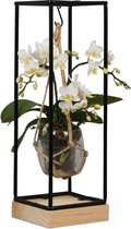 Orchidee | Trésor Wit in Frame  | Living Collection