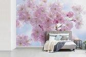 Fotobehang Kersenboom - Close-up van de roze bloesem van een kersenboom fotobehang vinyl breedte 450 cm x hoogte 300 cm - Foto print op vinyl behang (in 7 formaten beschikbaar) - slaapkamer/woonkamer/kantoor