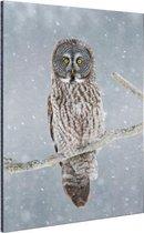 Uil in de sneeuw Aluminium 40x60 cm - Foto print op Aluminium (metaal wanddecoratie)
