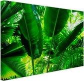 Tropische bladeren in jungle  Canvas 30x20 cm - klein - Foto print op Canvas schilderij (Wanddecoratie woonkamer / slaapkamer)