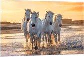 Forex - Witte Andalusiër Paarden op het Strand   - 120x80cm Foto op Forex