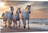 Forex - Witte Paarden op het Strand - 120x80cm Foto op Forex