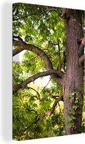 Kastanjeboom in het voorjaar Canvas 20x30 cm - klein - Foto print op Canvas schilderij (Wanddecoratie woonkamer / slaapkamer) / Bomen Canvas Schilderijen