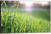 Dibond –Close Up Groen Gras -60x40 Foto op Aluminium (Wanddecoratie van metaal)