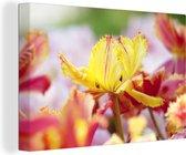 Close-up tulp Canvas 60x40 cm - Foto print op Canvas schilderij (Wanddecoratie woonkamer / slaapkamer) / Bloemen Canvas Schilderijen