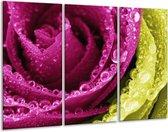Canvas schilderij Paars | Roze, Groen, Wit | 120x80cm 3Luik