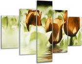 Glasschilderij Tulpen | Bruin, Groen | 100x70cm 5Luik | Foto print op Glas |  F002924