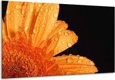Canvas schilderij Bloem | Zwart, Oranje | 120x70cm 1Luik