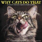 Katten - Why Cats Do That Kalender 2019