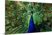 Symmetrische kleurrijke pauw Aluminium 120x80 cm - Foto print op Aluminium (metaal wanddecoratie)