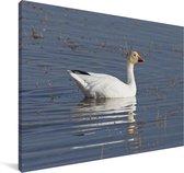 Sneeuwgans in het water Canvas 30x20 cm - klein - Foto print op Canvas schilderij (Wanddecoratie woonkamer / slaapkamer)