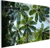 Bomen en bladeren in jungle Glas 180x120 cm - Foto print op Glas (Plexiglas wanddecoratie) XXL / Groot formaat!