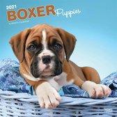 Boxer Puppies - Boxer Welpen 2021 - 18-Monatskalender mit fr