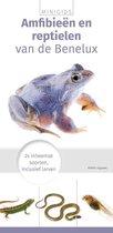 Minigids  -   Minigids Amfibieën en reptielen
