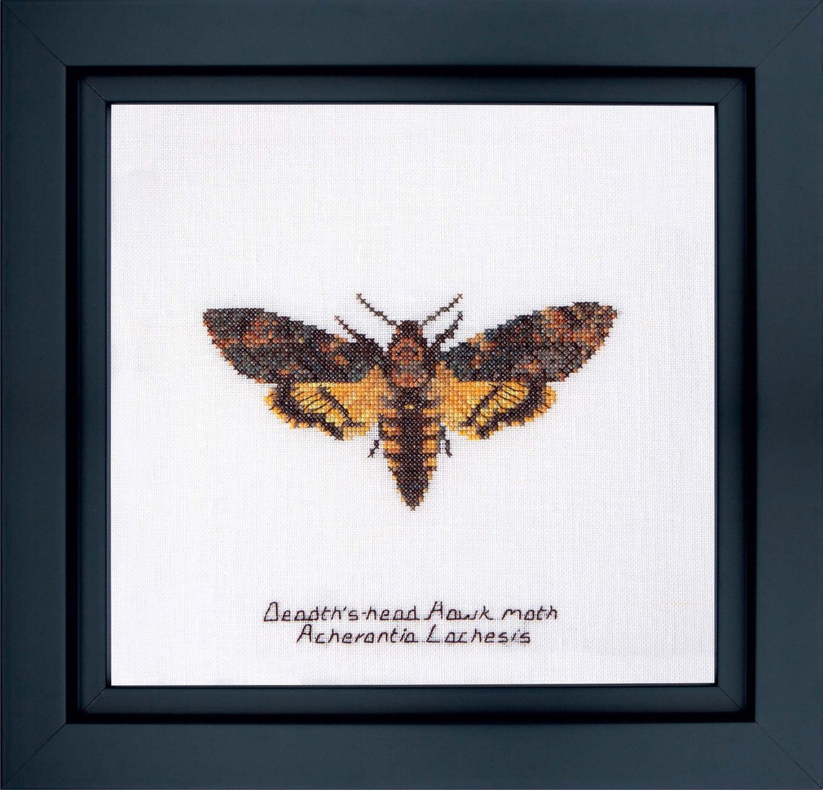 The Gouverneur borduurpakket DEATH'S-HEAD HAWK MOTH  21x21cm