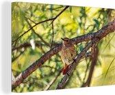 Gekraagde roodstaart in het bos Canvas 120x80 cm - Foto print op Canvas schilderij (Wanddecoratie woonkamer / slaapkamer)